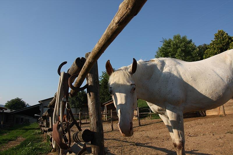 Passeggiate coi cavalli