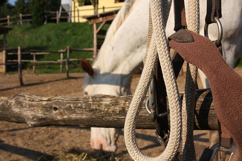 Scuola di cavallo